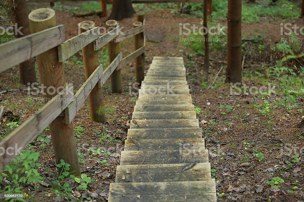 Wooden stairs in the middle of nature foto royalty-free