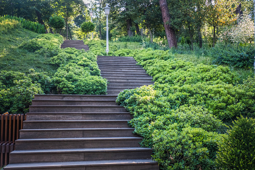 Wooden stairs in the park