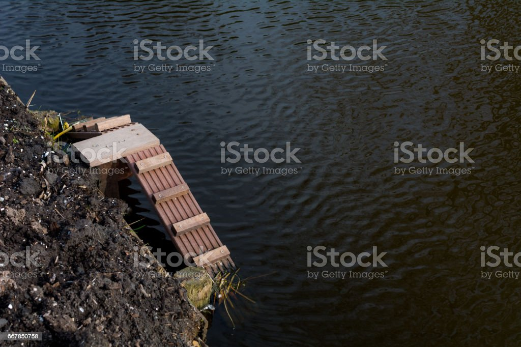 Wooden steps for baby waterbirds leaving the pond stock photo