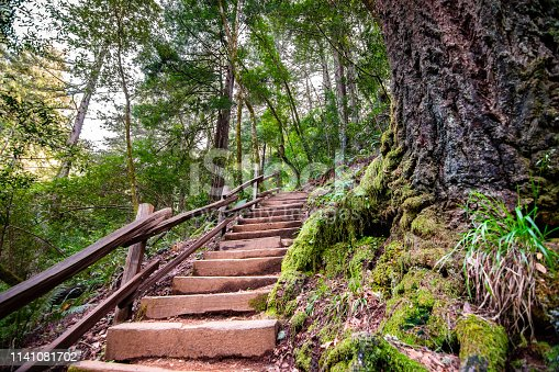 Wooden steps going up through a green forest in Marin County, north San Francisco bay area, California