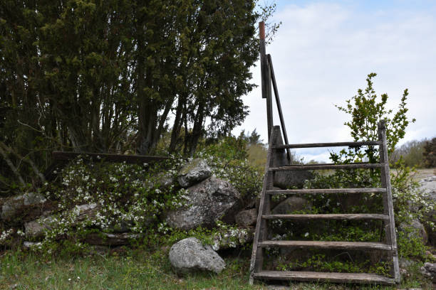 Wooden stile crossing an old traditional stone wall stock photo