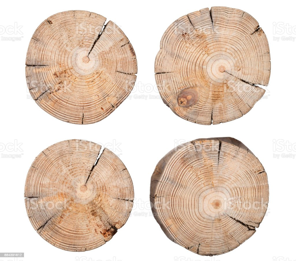 Wooden Stump Isolated on White Background stock photo