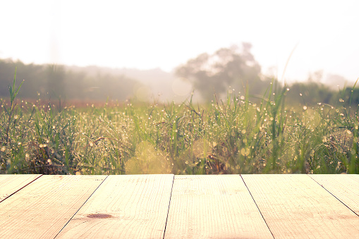 wooden table and grass field at morning