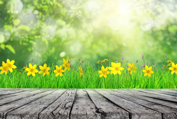 wooden table and spring grass and tree leaves background wooden table and spring grass with flowers  and tree leaves background springtime stock pictures, royalty-free photos & images