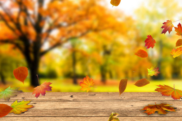 wooden table in front of colorful fall leaves wooden table in front of a colorful autumn landscape autumn leaf color stock pictures, royalty-free photos & images