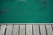 istock Wooden Table Top on green water 1153051684