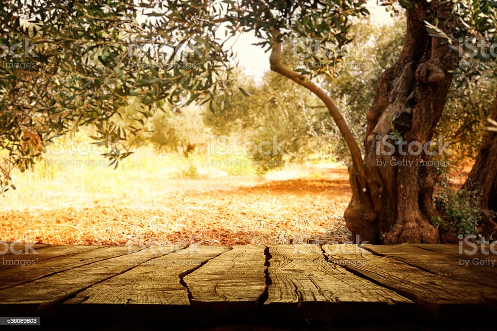 Wooden table with olive tree stock photo