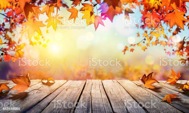 Maple Leaves And Old Plank In Autumn Background