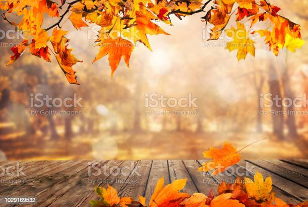 Wooden table with orange leaves autumn background picture id1029169532?b=1&k=6&m=1029169532&s=612x612&h=hx7 y2fo7wzymr79t44wggn0fnli uwxuwznbplfuvc=