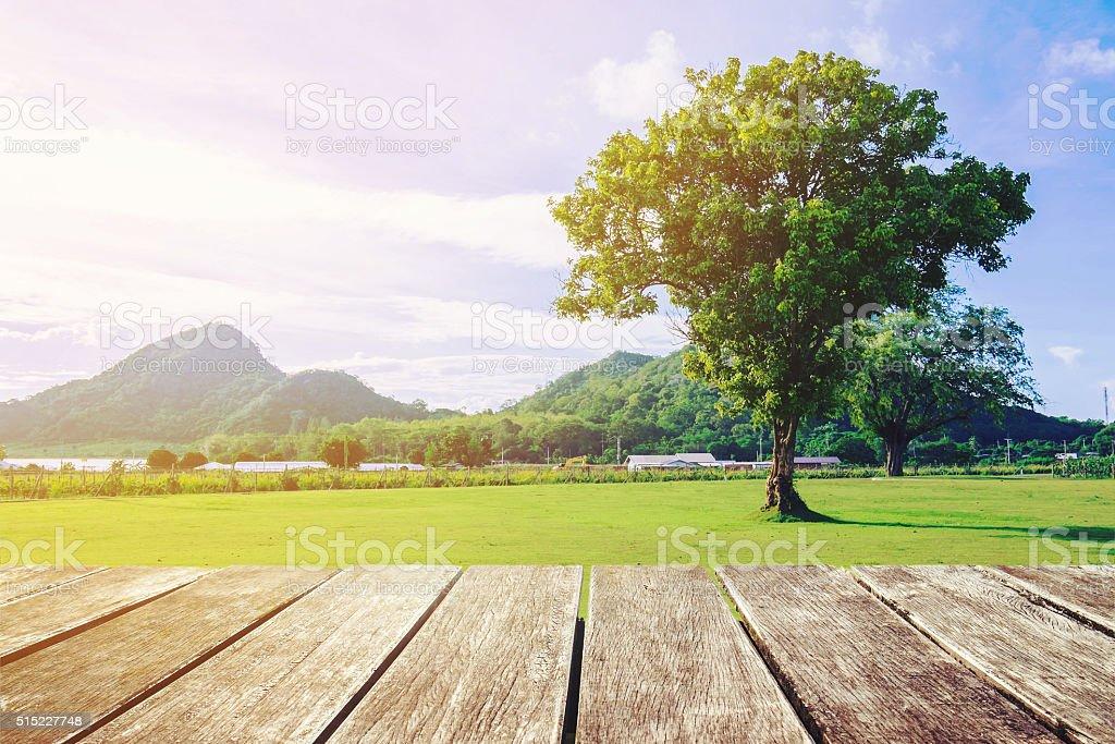 Tono Terraza : Fotografía de terraza con vista de madera natural y solo árbol