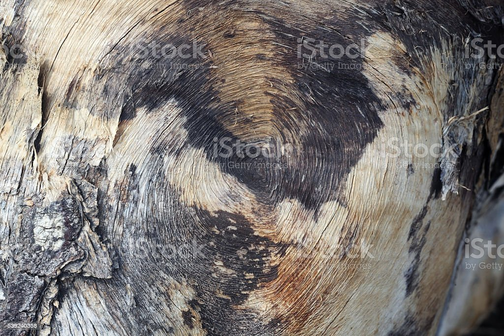 wooden texture as background. royalty-free stock photo