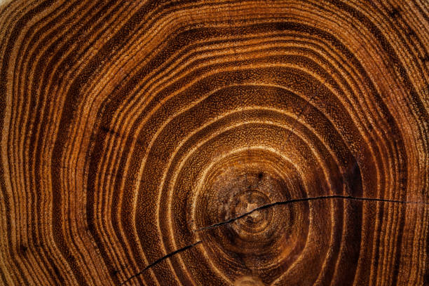 fond de texture en bois - bague photos et images de collection