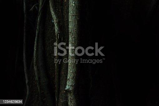 465559373 istock photo wooden texture 1234625634
