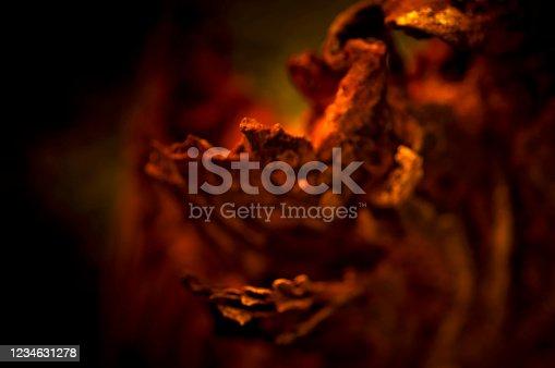 465559373 istock photo wooden texture 1234631278