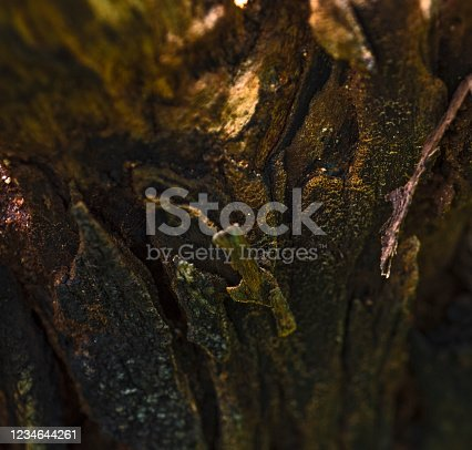 465559373 istock photo wooden texture 1234644261