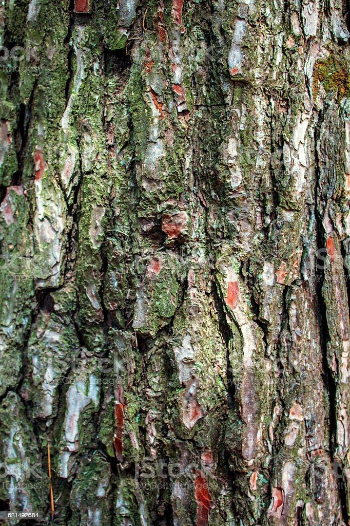 Holz Struktur  Lizenzfreies stock-foto