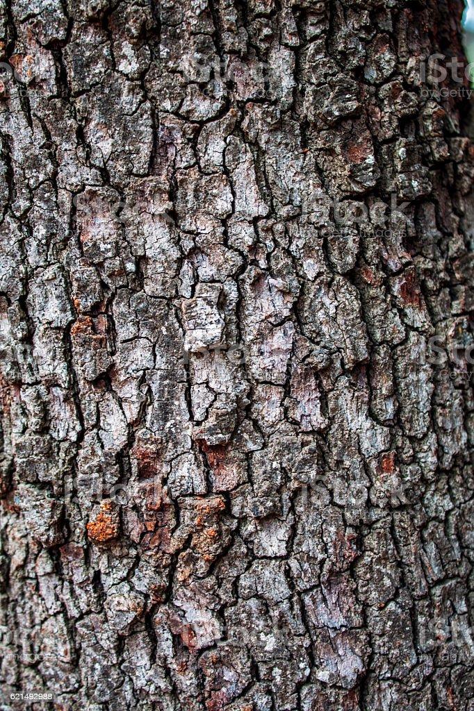 texture di legno  foto stock royalty-free