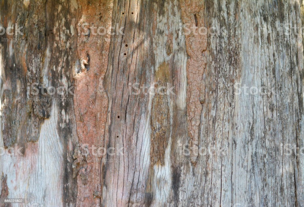 Wooden texture with insect bites. stock photo