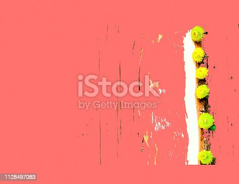 Three  violet flowers.Closeup on white background. Isolated.