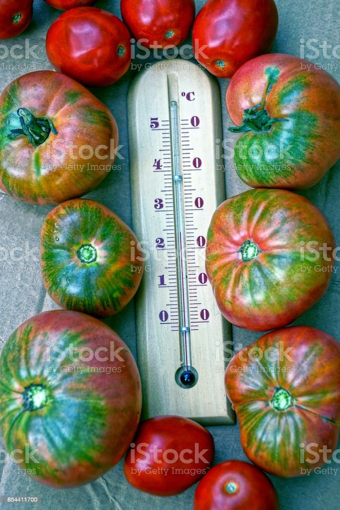 A wooden thermometer and ripe red tomatoes stock photo