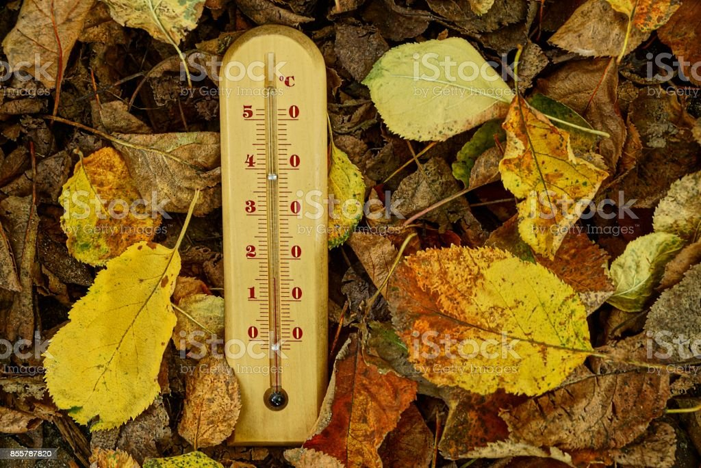 A wooden thermometer on dry fallen autumn leaves stock photo