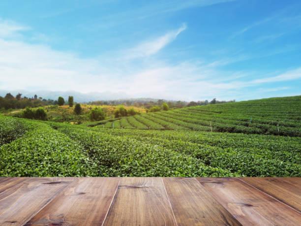 top holztisch über grüntee-feld - landküche stock-fotos und bilder