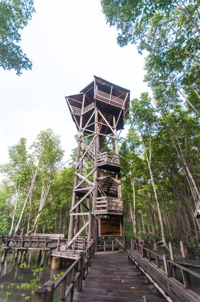 holzturm im mangrovenwald - hohe warte stock-fotos und bilder