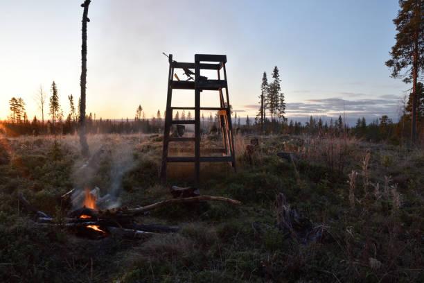 torn av trä används för älgjakt i morgon lite - älg sverige bildbanksfoton och bilder