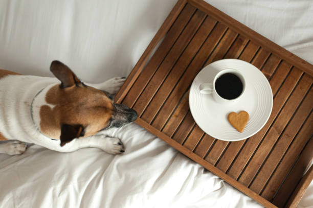 Wooden tray and dog in bed stock photo