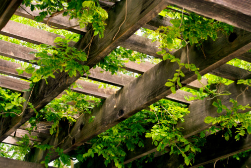 Wooden Trellis With Hanging Plants Stock Photo Download