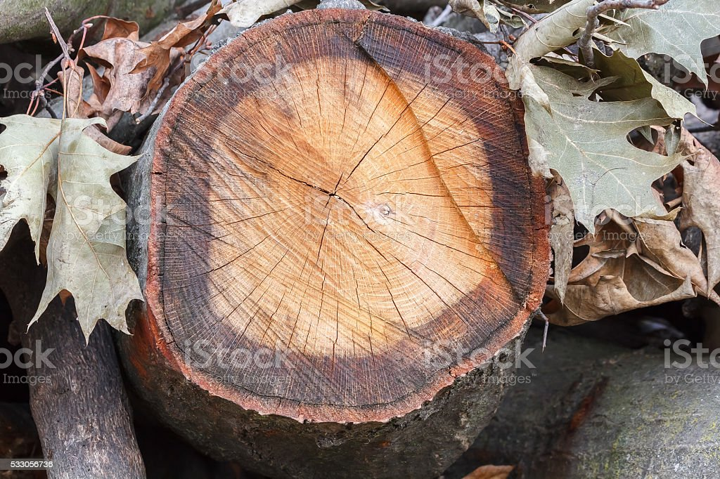wooden trunk with leaves stock photo