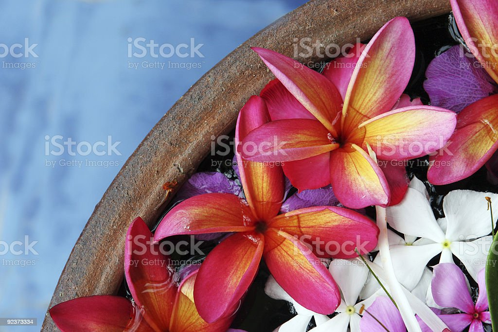 A wooden vase of pink hibiscus flowers royalty-free stock photo