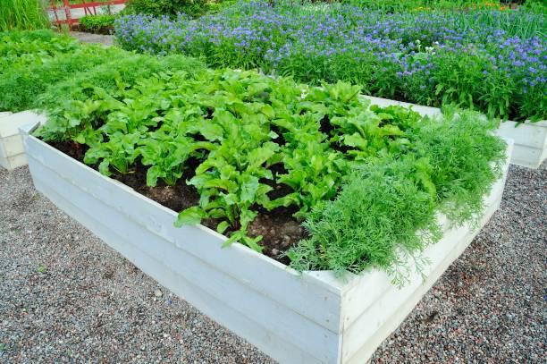 Gartenboxen aus Holzgemüse – Foto