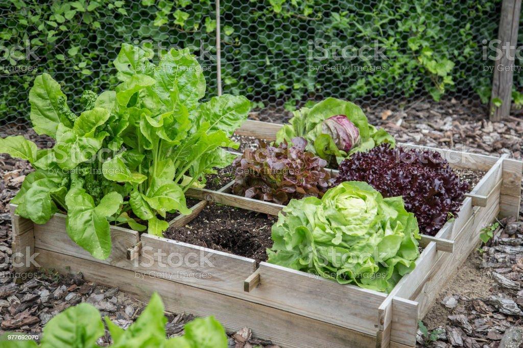 Houten kisten voor groente tuin foto
