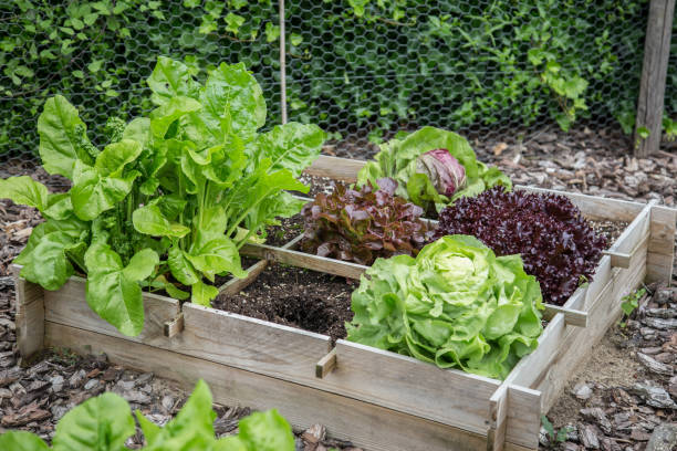 Madera cajas jardín vegetales - foto de stock