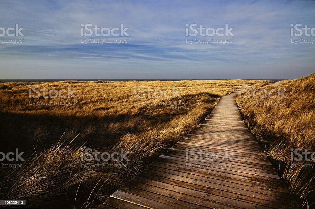 Wooden Walking Path Through Field - Sylt ( Germany ) stock photo