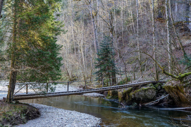 Wooden walkway across the Wutach river. stock photo