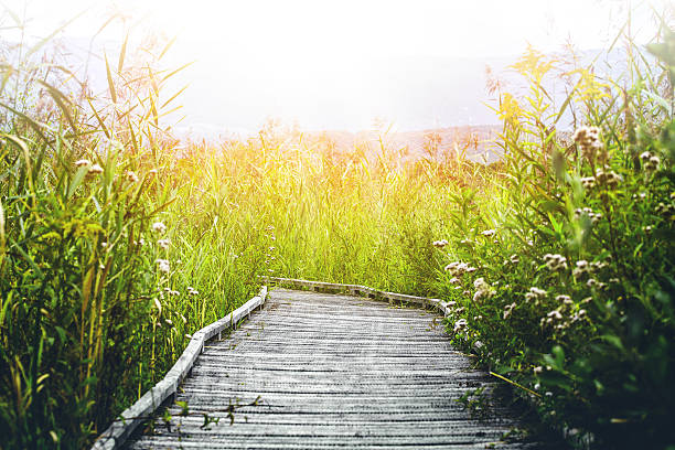 Wooden walkway footpath on stilts swamp bright sunlight in summer picture id636461942?b=1&k=6&m=636461942&s=612x612&w=0&h=idwm4ptycy7nntgbumtmuqe30q0v wpizqth7xqyfxm=
