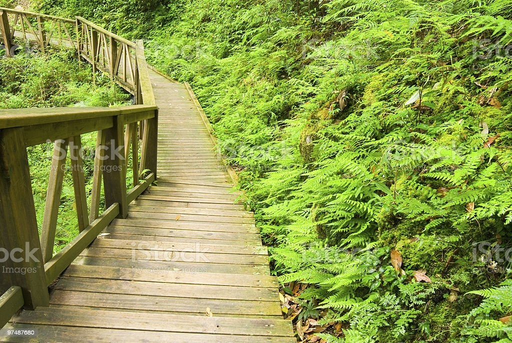Wooden walkway into the forest royalty-free stock photo