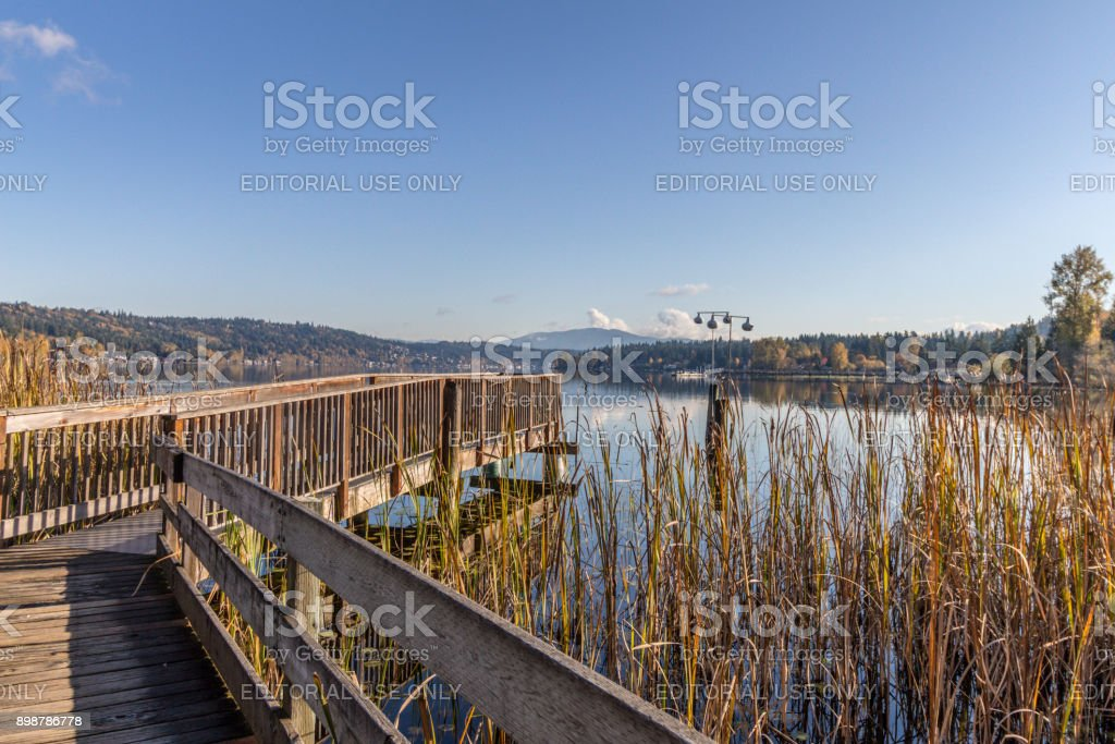 Wooden Walkway out to Sammamish Slough stock photo