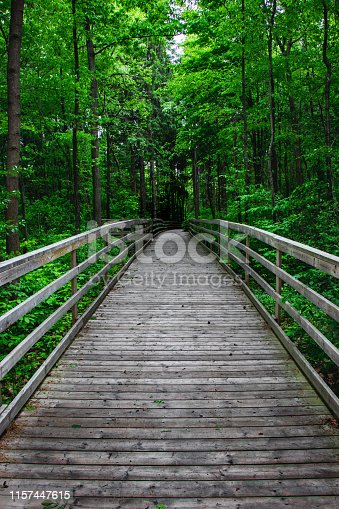 Photographed this walkway leading towards the forest with beautiful trees on either side