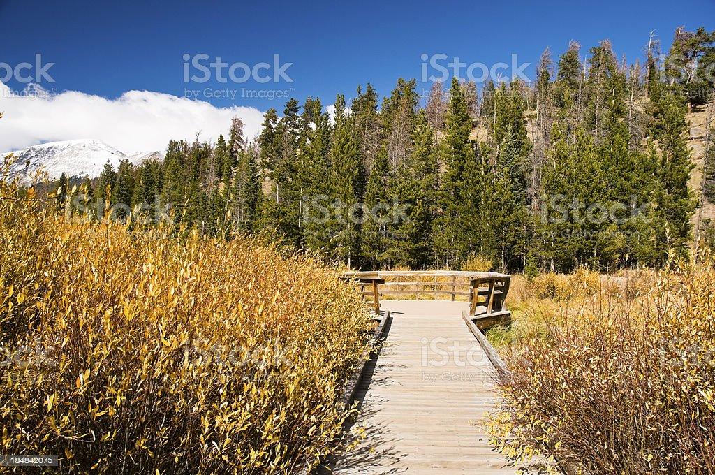 Wooden Walkway Through Mountain Willows royalty-free stock photo