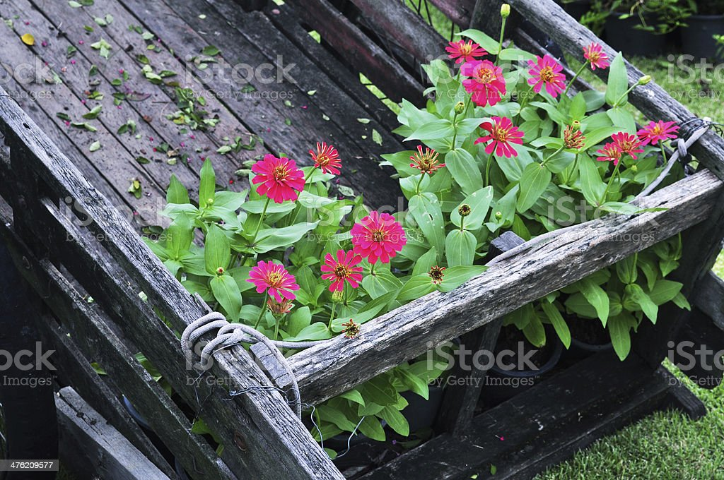 wooden wheelbarrow filled with flowers royalty-free stock photo