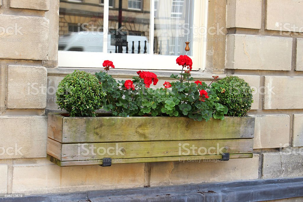 Wooden window box with red geranium flowers and buxus balls stock photo