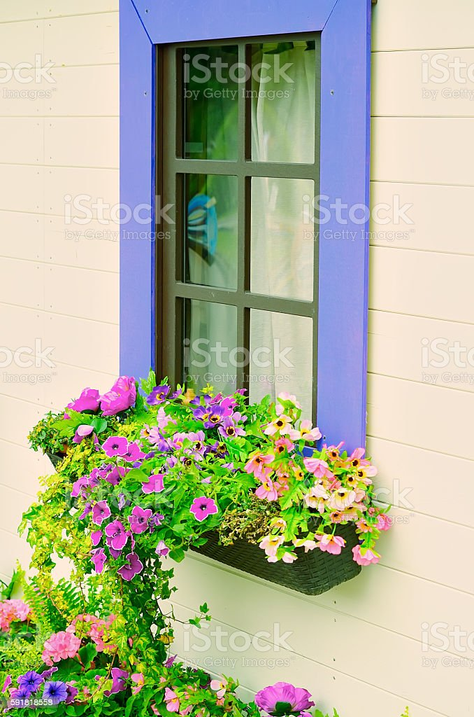 Wooden windows with flowers. stock photo