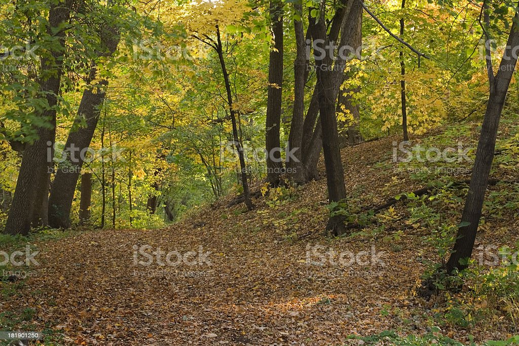 Woodland Autumn royalty-free stock photo