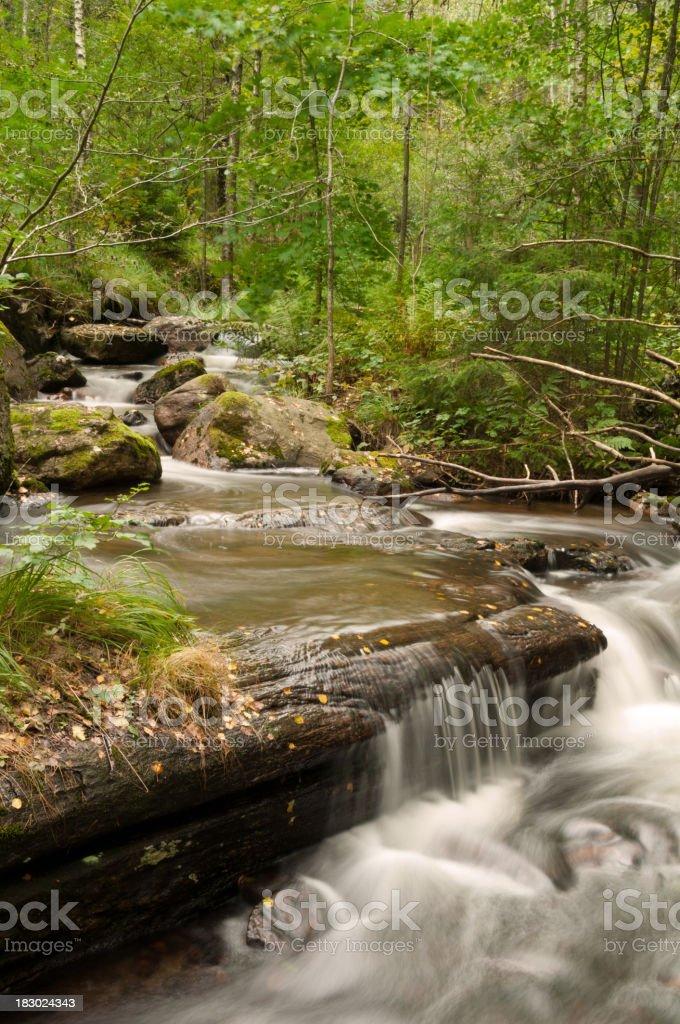 Woodland brook royalty-free stock photo