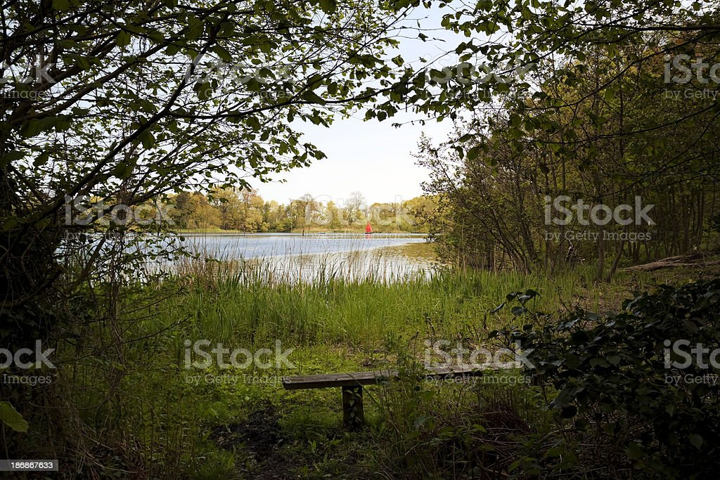 Woodland clearing beside Little South Walsham Broad royalty-free stock photo