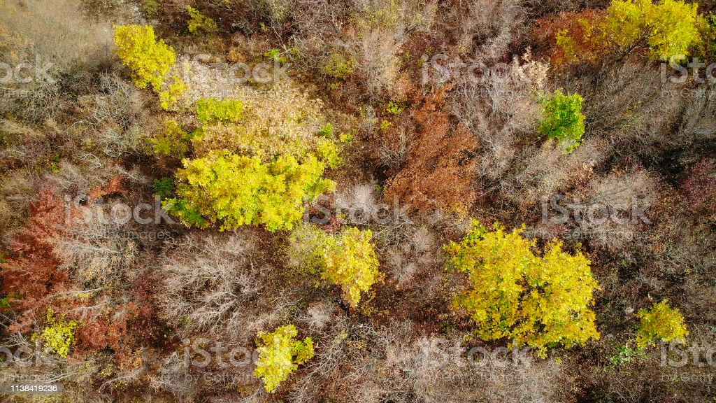 Forest from above in autumn with drone, aerial view.