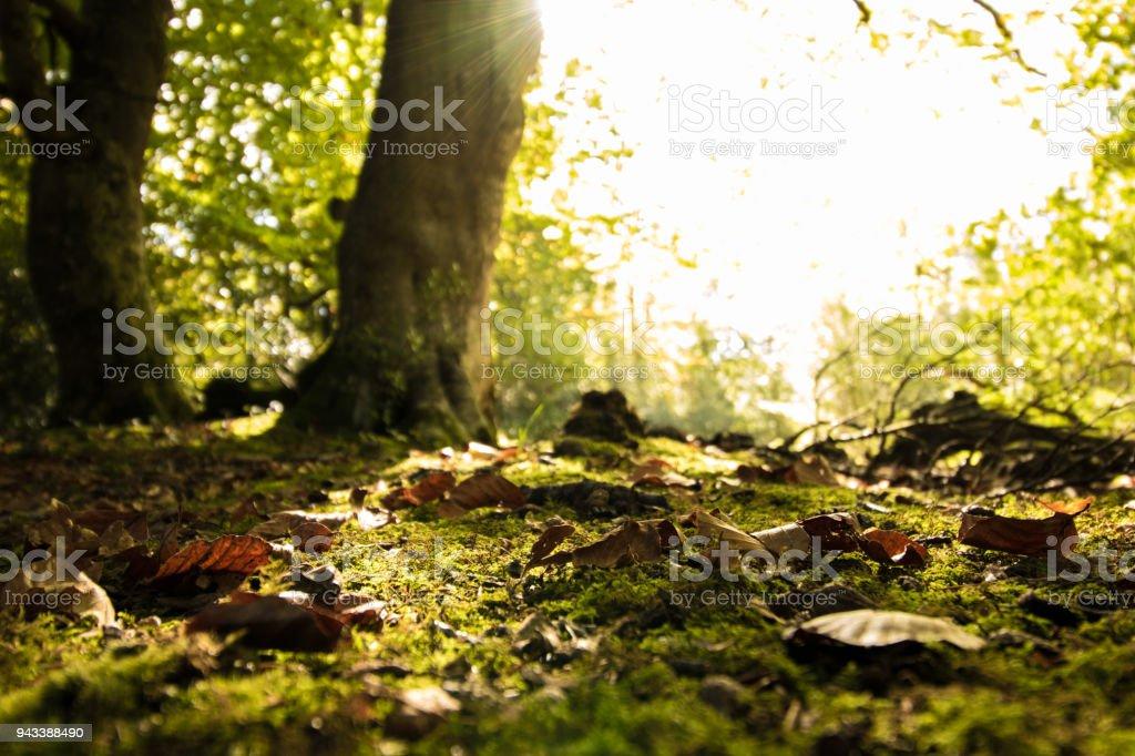 Woodland Forest Floor stock photo